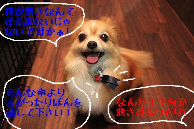 募集でぇ~~~す!!_b0130018_0133618.jpg