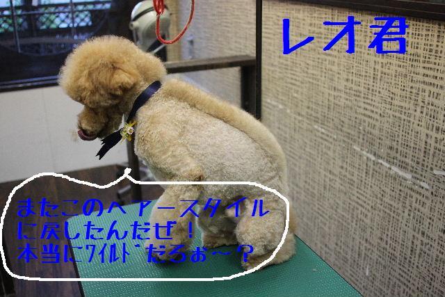 募集でぇ~~~す!!_b0130018_0144852.jpg