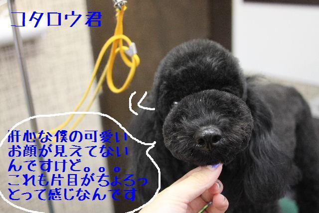 募集でぇ~~~す!!_b0130018_016398.jpg