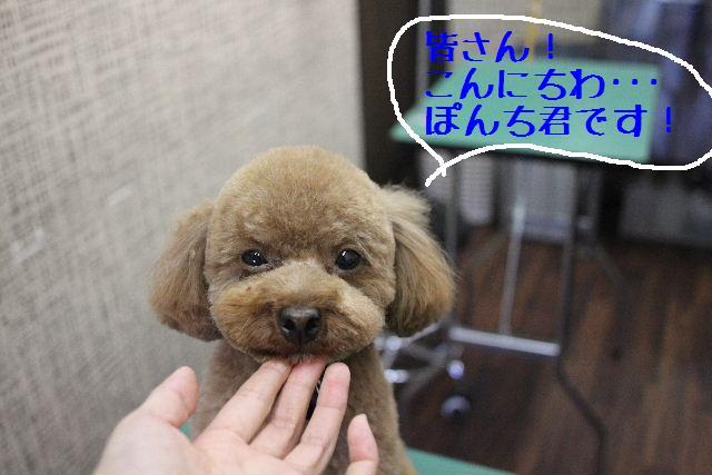 募集でぇ~~~す!!_b0130018_075811.jpg