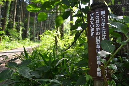 天神山プチ登山&富久樹園カフェ_e0228938_18182743.jpg