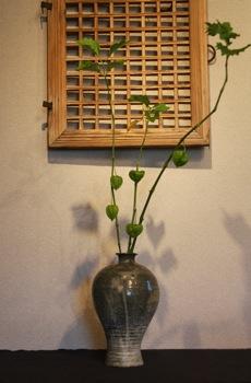 花だより_a0279848_2191342.jpg