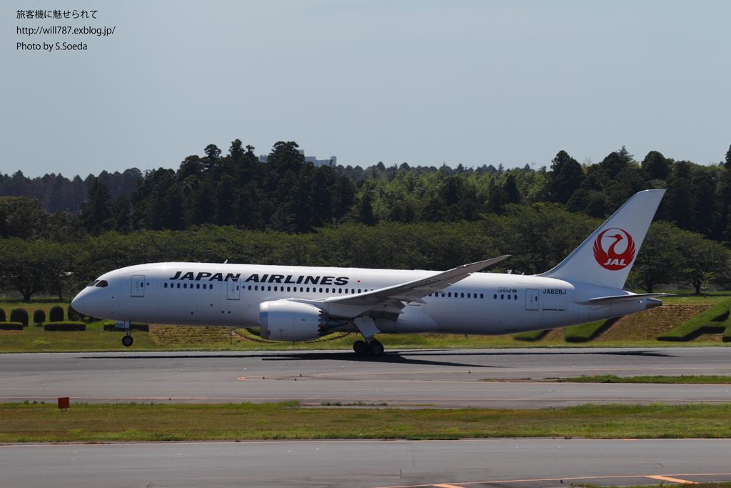 8/9 JAL × B787_d0242350_1091575.jpg