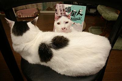猫星人 Attack!来た〜!_a0028451_1234471.jpg