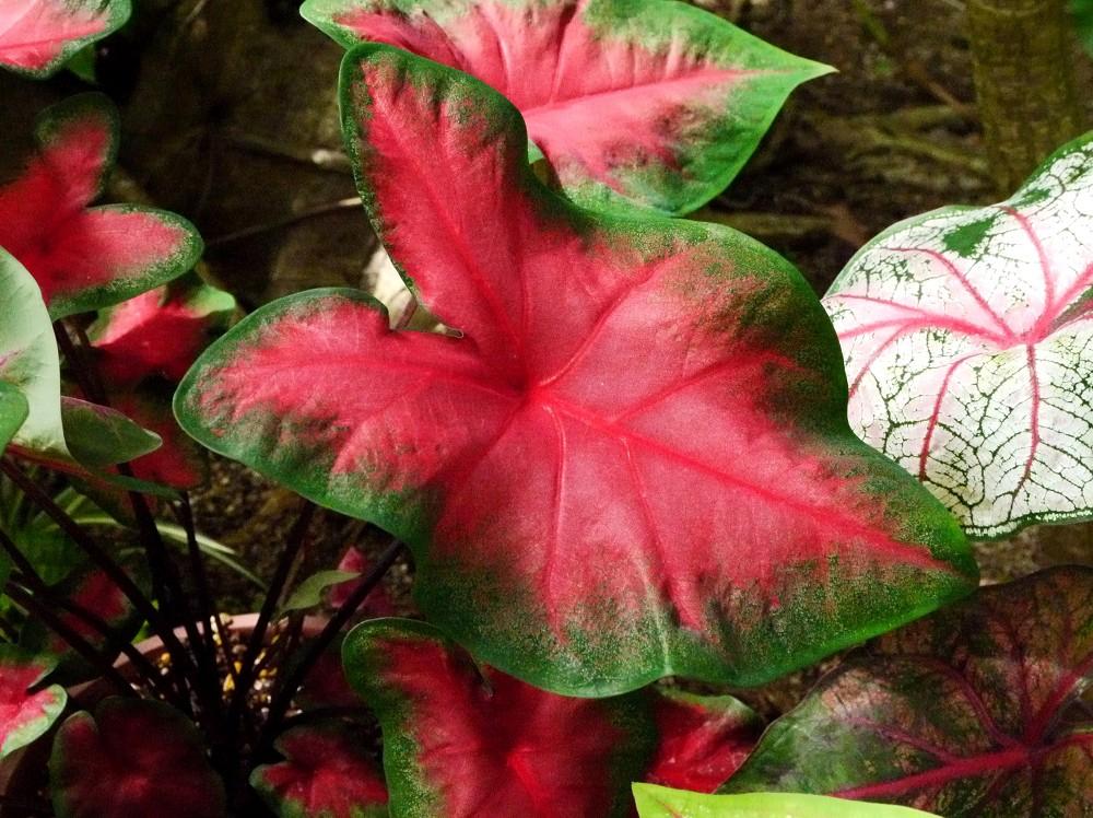 和歌山県植物公園緑花センター _b0093754_22474140.jpg