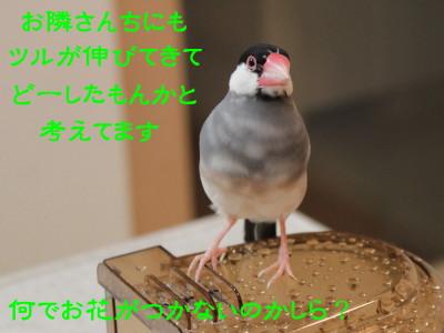 b0158061_2122580.jpg