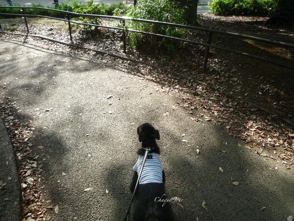 朝のお散歩コース_d0266681_10113441.jpg