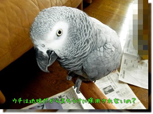 c0133013_1610457.jpg