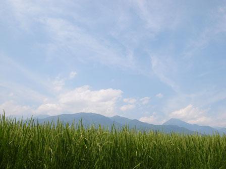 安曇野の夏休み_a0014840_2032409.jpg