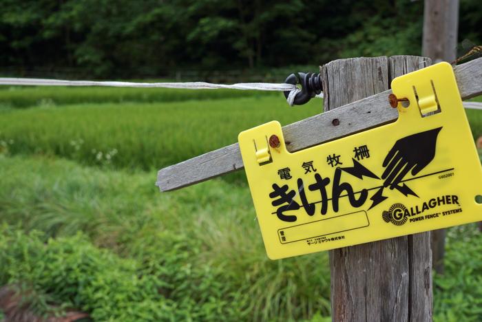 除草剤と鹿よけ_c0182775_20295896.jpg