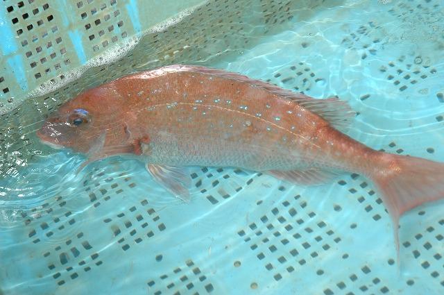 季節とともに 魚に変化あり_d0268290_14425818.jpg