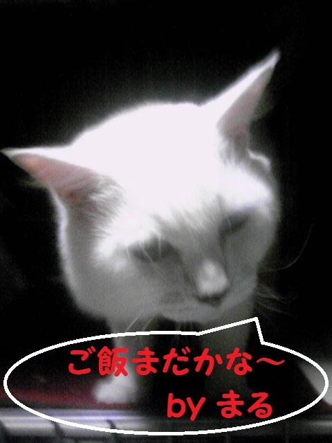 a0232197_20375942.jpg