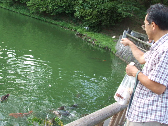 千秋公園(せんしゅう)の蓮の花_f0019498_21403634.jpg