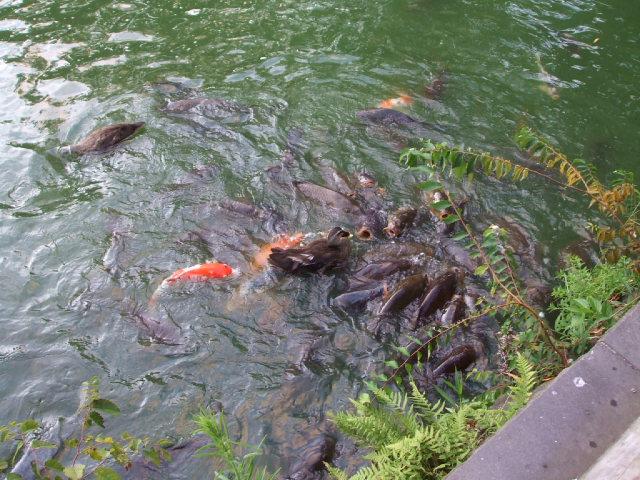 千秋公園(せんしゅう)の蓮の花_f0019498_21412836.jpg