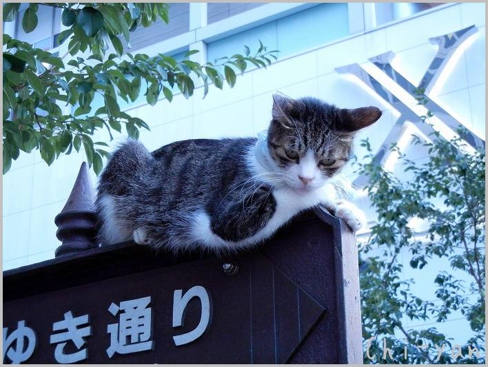 銀座の猫_e0219011_847127.jpg