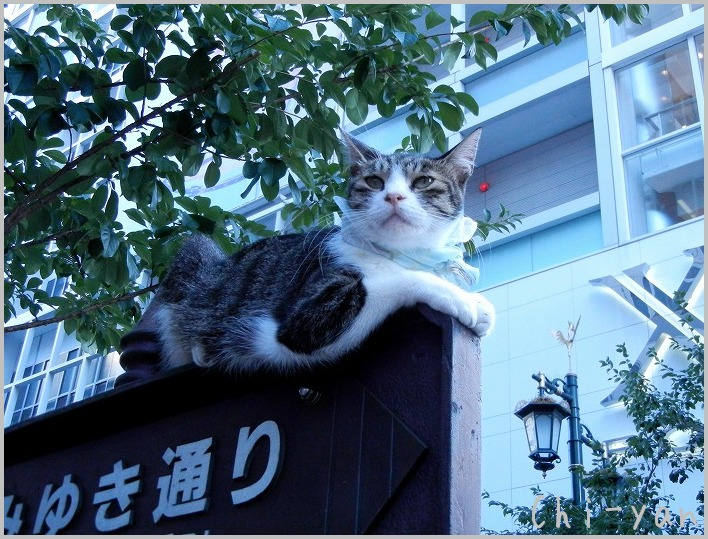 銀座の猫_e0219011_8471311.jpg