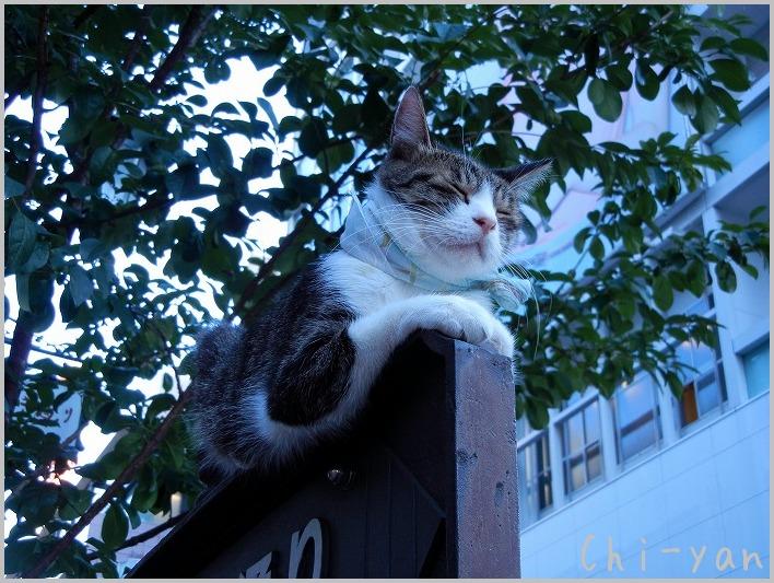 銀座の猫_e0219011_8472169.jpg