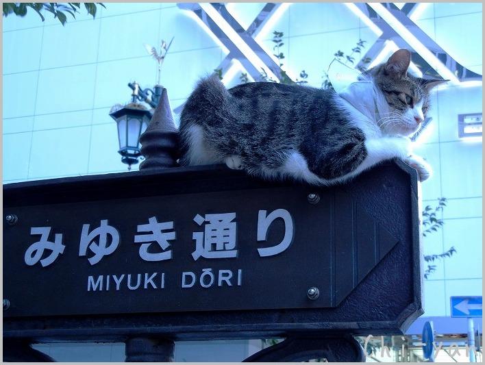 銀座の猫_e0219011_8472975.jpg