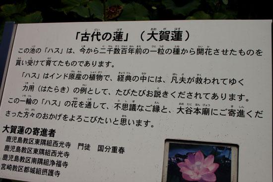 西大谷のお盆_e0048413_1648073.jpg