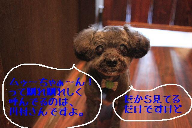 b0130018_075642.jpg