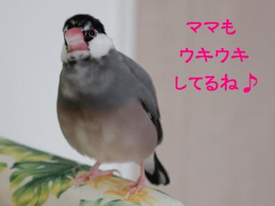 b0158061_2161151.jpg