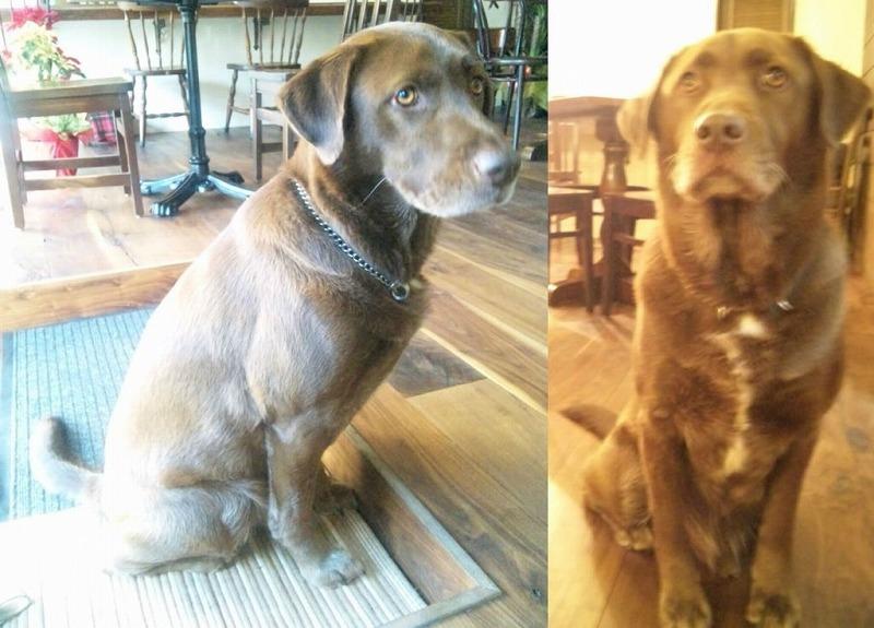 【ラブラドール・迷子犬】つくばくんを探してください。【土浦・つくば】_a0091865_13191894.jpg