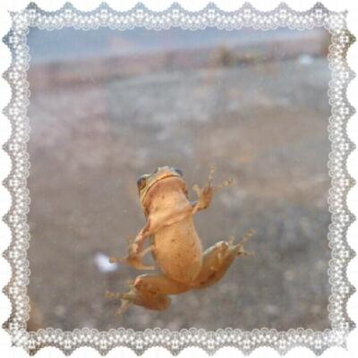 蛙は平気なんだよね。_a0139911_074529.jpg