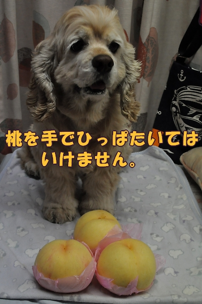 b0067012_16341121.jpg