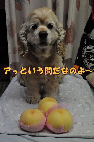 b0067012_16342593.jpg