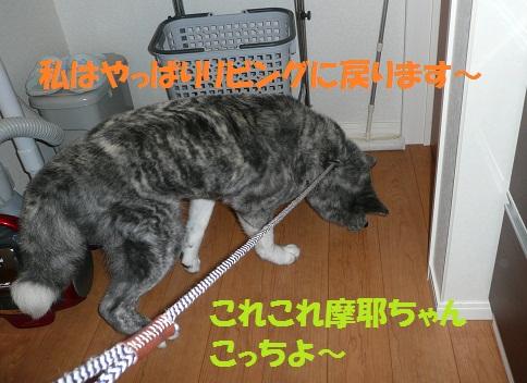 f0121712_1774365.jpg