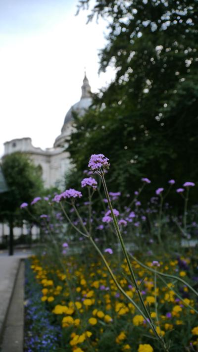 この花はなんて名前?・・・LONDON St.Paul\'s Cathedralの裏側で撮影しました→_b0032617_13551246.jpg