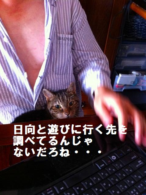 a0147921_12465369.jpg