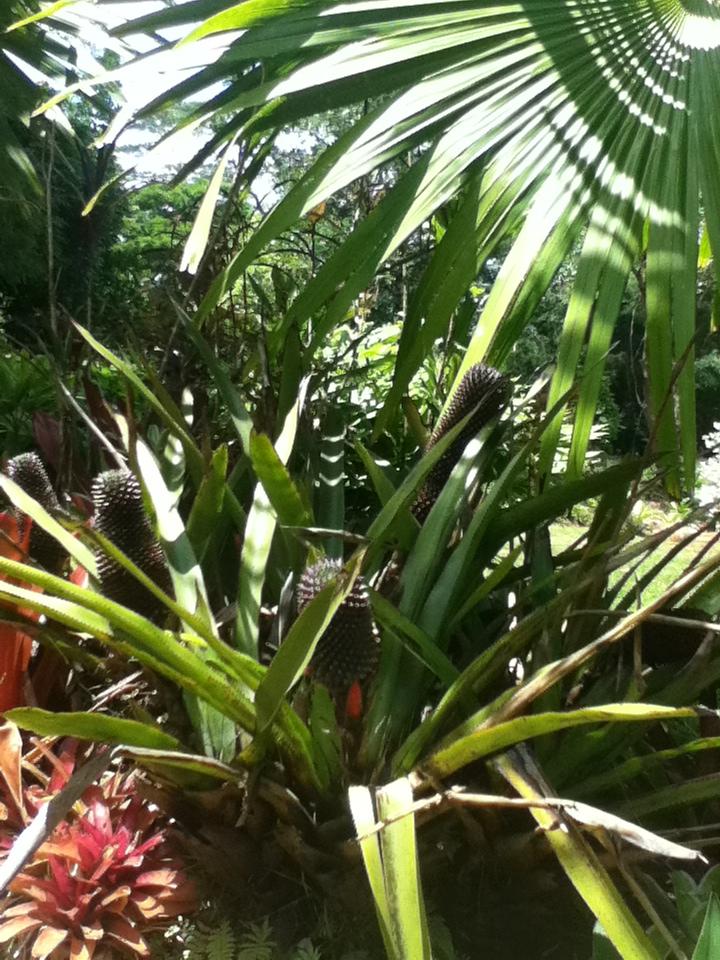 ハワイの旅こぼれ話し<カウアイ島のヒンズー寺院>_f0095325_12182030.jpg