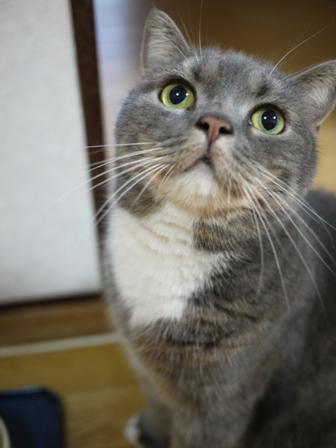 猫のお友だち スコティーちゃんナノちゃん編。_a0143140_225598.jpg