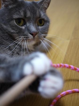 猫のお友だち スコティーちゃんナノちゃん編。_a0143140_22565052.jpg