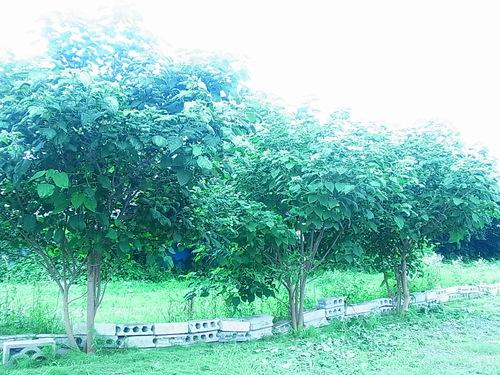 夏です。お盆です。キャンプです。_b0207642_16234964.jpg