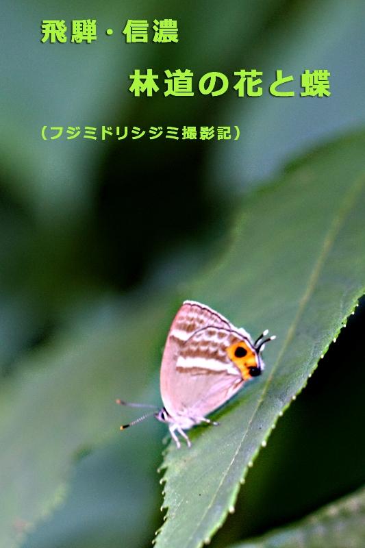 b0144049_16155552.jpg