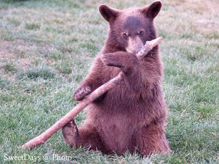 Bear Country USA_e0046675_640404.jpg