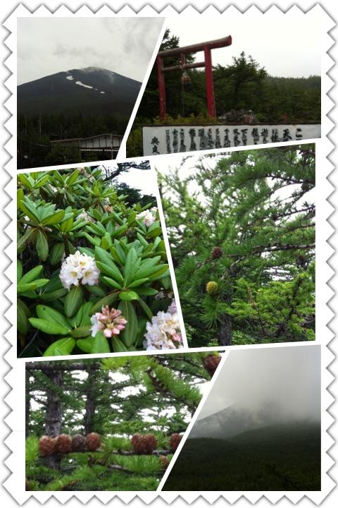 天狗の庭_b0008478_9495495.jpg