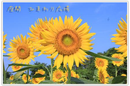 b0024183_837322.jpg
