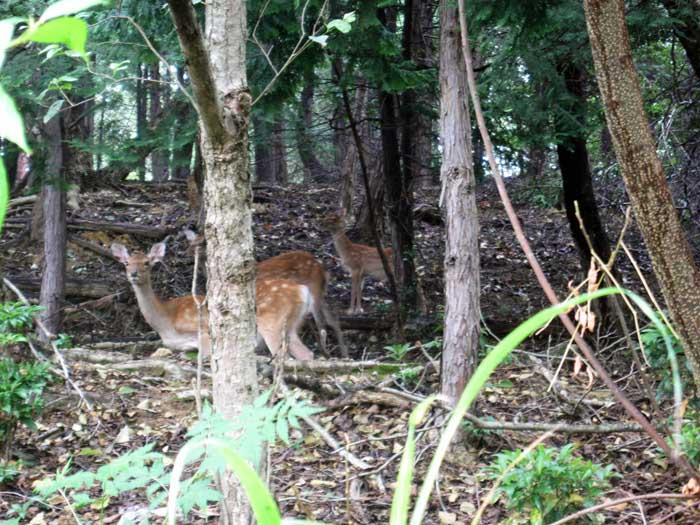 鹿の親子_e0016894_8312012.jpg