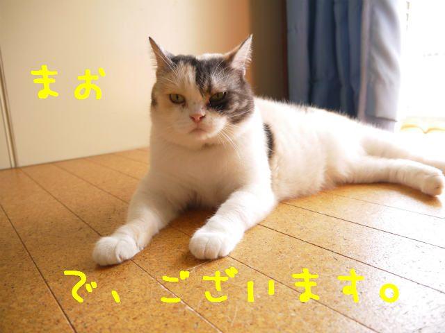f0218911_354382.jpg