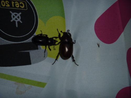 昆虫だらけ!!_b0174425_1430456.jpg