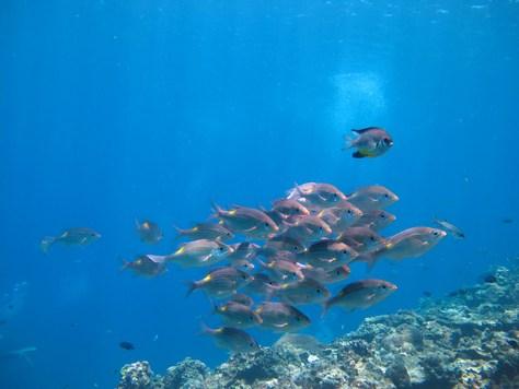 8月13日慶良間ダイビングVS水納島ダイビング_c0070933_22423994.jpg
