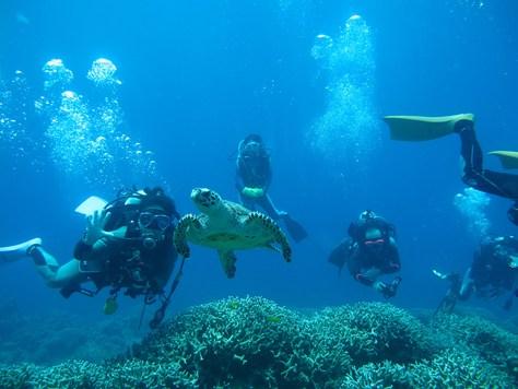 8月13日慶良間ダイビングVS水納島ダイビング_c0070933_22425974.jpg