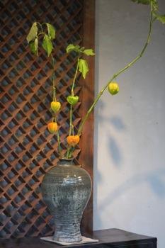 花だより_a0279848_21571923.jpg