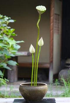 花だより_a0279848_229536.jpg