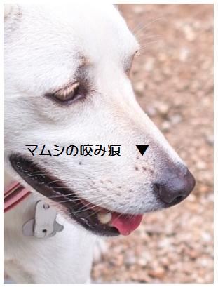 d0005250_1874591.jpg