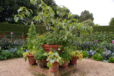 Whichford  potに出会える場所in England_d0229351_18103354.jpg