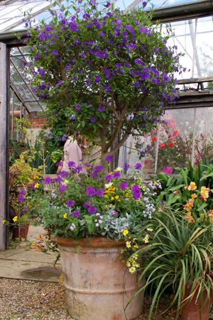 Whichford  potに出会える場所in England_d0229351_18104722.jpg